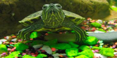 Kaplumbağa Isimleri Kaplumbagagentr